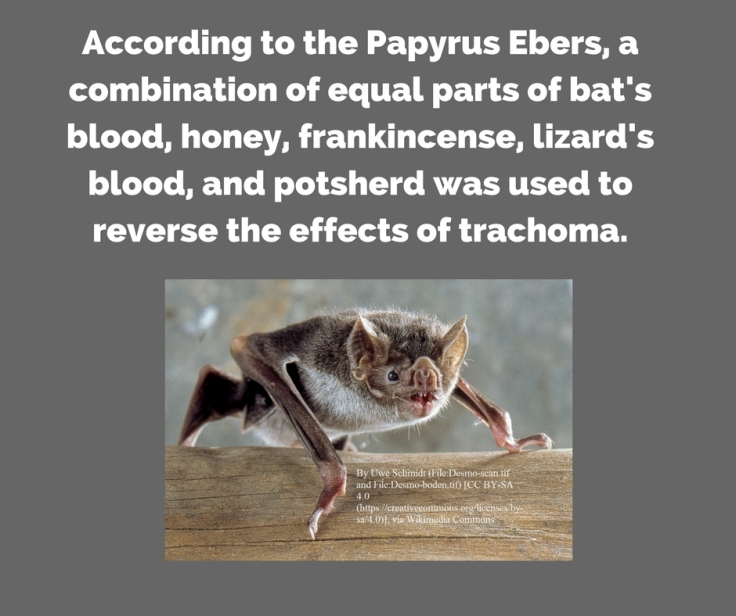 According to the Papyrus Ebers, a combination of equal parts of bat's blood, honey, frankincense, lizard's%2
