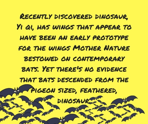 Recently discovered dinosaur, Yi qi has wings that appear to have been an early prototype for the wings%