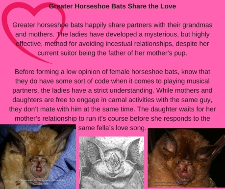 Sharing the LoveMost of the world_s bats species are polygamous by nature, and at least some of the sp