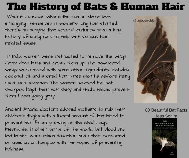 The Long History of Bats & Human Hair (1)