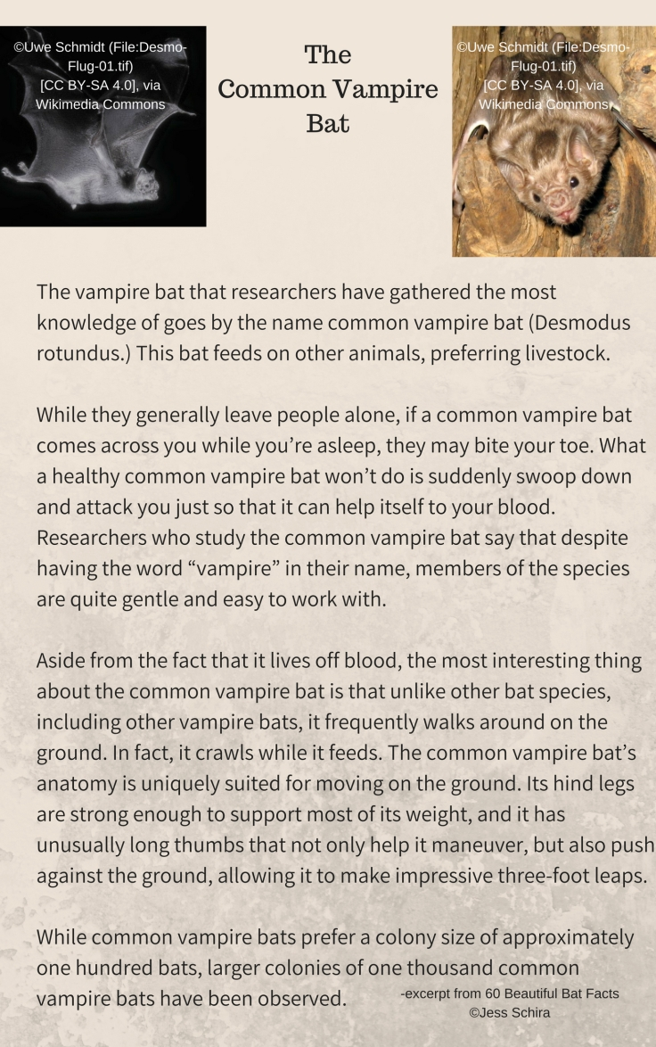 The vampire bat that researchers have gathered the most knowledge of goes by the name common vampire bat